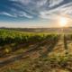 Sposarsi in Toscana: la cornice perfetta per la tua favola