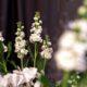 Pianificare un matrimonio da sogno